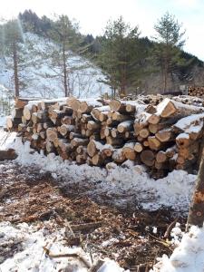 2018 冬季森林伐採見学etc_180205_0007